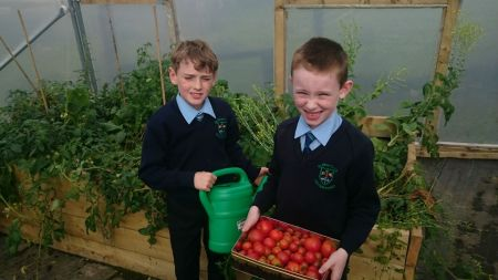 Look at our lovely tomatoes.